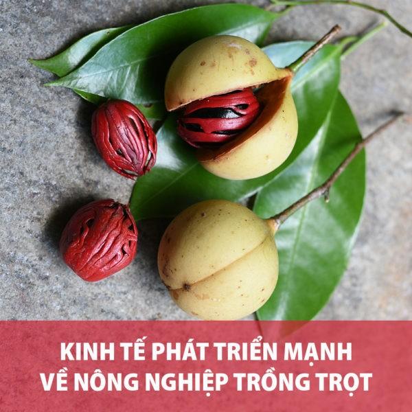 KINH TE